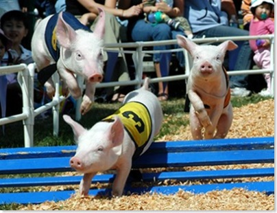 aEvergreen Fair pigs037