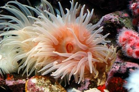 Podvodni cudesni svet Azoo-sea-anenome