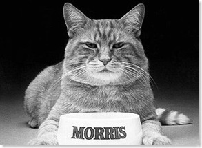 Morris_the_Cat bw